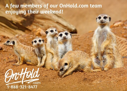 Happy Sunday from OnHold.com!